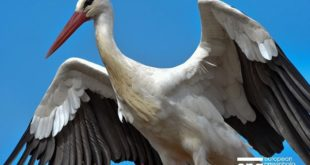 В Воронежском зоопарке зафиксированы факты гибели птиц занесенных в Красную книгу