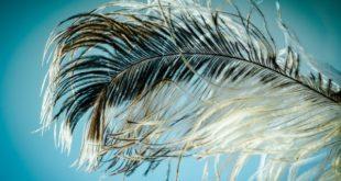 Писать перьями научат в областном краеведческом музее