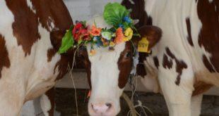 В Липецке состоится  выставка племенного скота