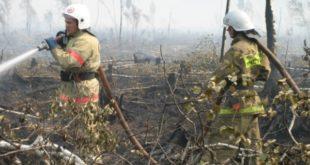 Метеорологи предупредили губернатора и всех липчан о высокой пожароопасности лесов