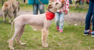Бездомных собак изЛипецка отвезут вТамбов