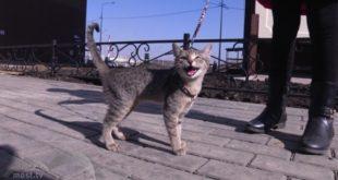 Бешеная кошка искусала 6человек. Трое пострадавших дети