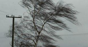 Спасатели предупредили обусилении ветра вЛипецке доштормового