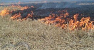 ВЛипецкой области сгорело 200 тонн сена
