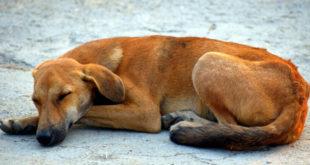 Собак и кошек в Липецке собираются травить?