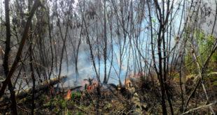 В Липецке возле областной детской больницы горели посадки