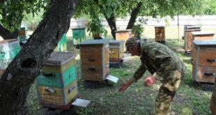 Производство мёда в России может сократиться на четверть
