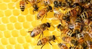 «Любишь медок, люби и холодок». Предпринимателя подозревают в краже 16 пчелосемей