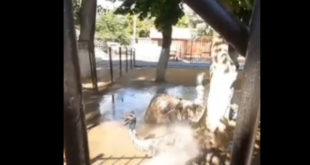 Птиц поливают из шланга в Липецком зоопарке