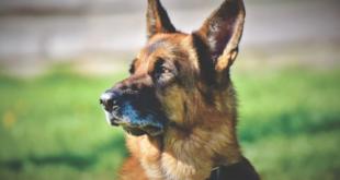Собак учат выявлять COVID на пунктах погранконтроля